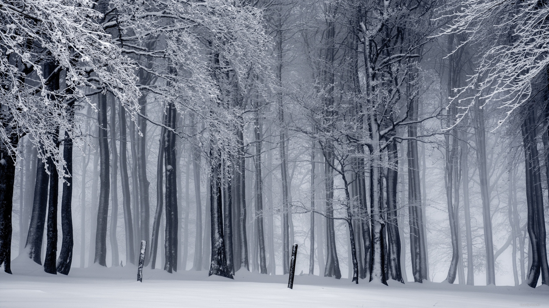 Обледенелые-деревья-